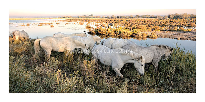 GFCOHEN - CAMARGUE photos