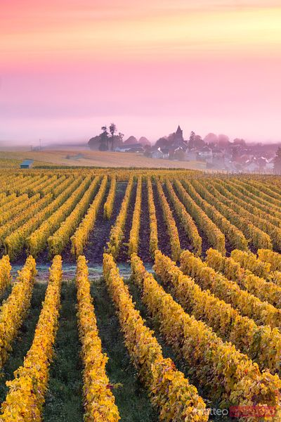 France - Champagne images