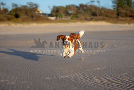 Dog jumping on a beach