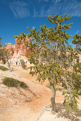 High Desert Hikers- Bryce Canyon, Utah