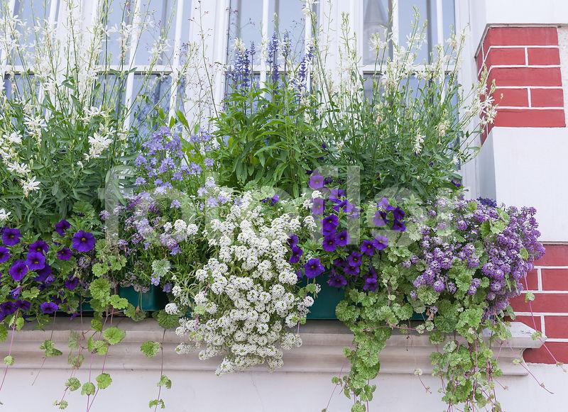photo de jardini re d 39 t en bleu et blanc bleu. Black Bedroom Furniture Sets. Home Design Ideas