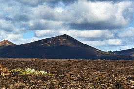 A lone plant stands up against the volcanos in the distance