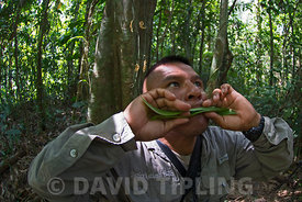 Forest guide Isaac Pizarro imitating the call of a Harpy Eagle, Darién National Park Panama