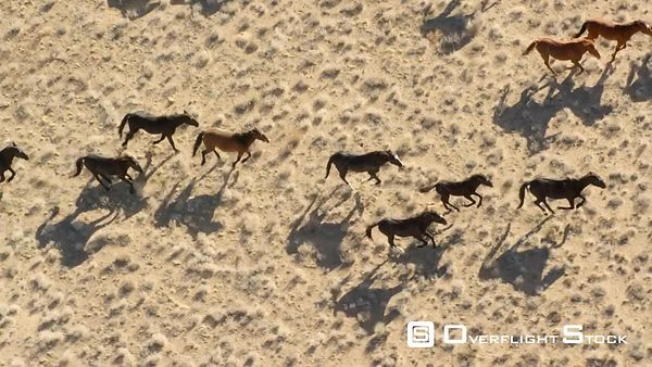 Wild Mustang Horses of the South West Shot on RED Epic