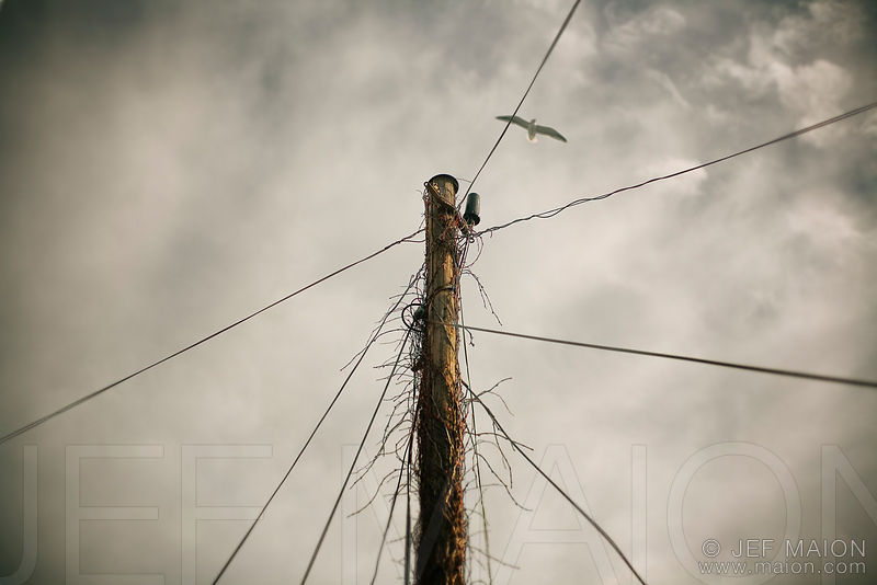 Electric pole and wires