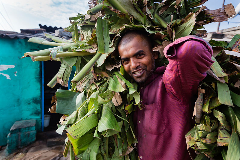 Market Worker Carrying Discarded Banana Leaves