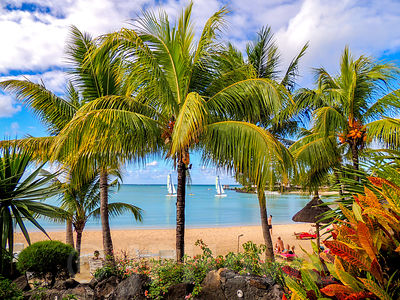 Vegetation and Palm Trees Lining the Grand Gaube Bay in Mauritius