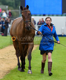 Lillian Heard and LCC BARNABY at the trot up, Land Rover Burghley Horse Trials 2017