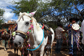 Horse and gauchos during carnival, Canasmoro, Tarija Department, Bolivia