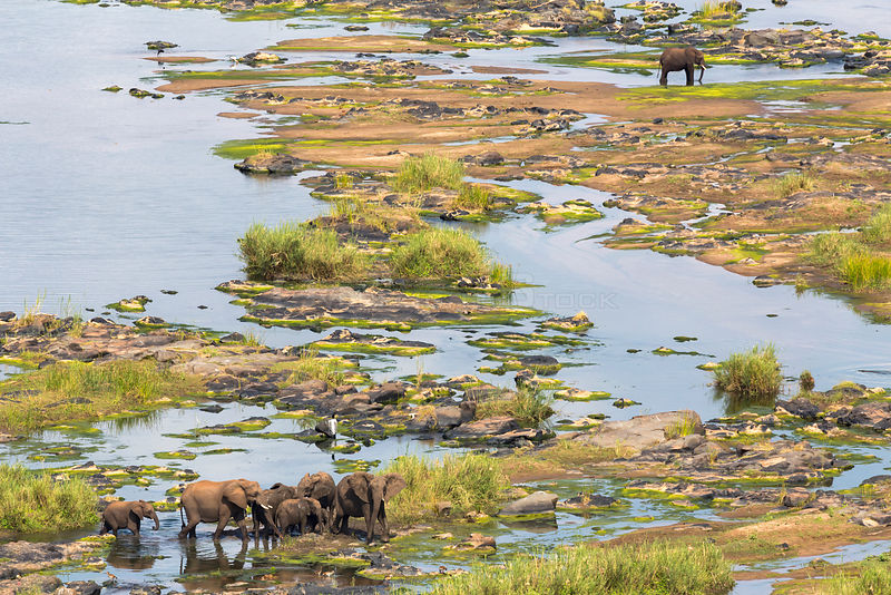 Aerial view of African elephants (Loxodonta africana), crossing Olifants River, Kruger National Park, South Africa, May