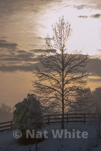 Canyon_Farm_Winter-NAW_3776-December_25_2012