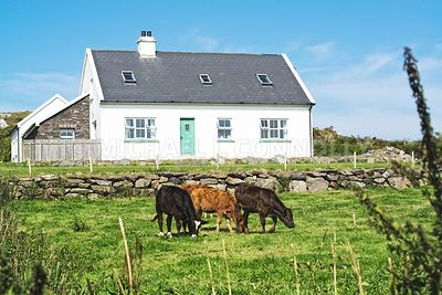 Farmhouse and Cattle- County Kerry, Ireland