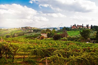 Tuscany Italy Vineyard and Countryside