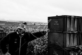 Lassalle-vendanges13_MKB8423