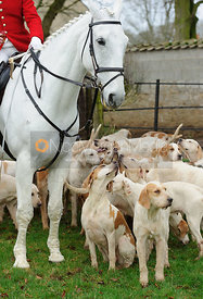 Cottesmore hounds at the meet  at Barleythorpe 22/12