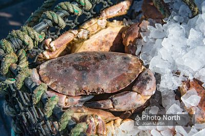 CRAB 50A  Crabs in ice basket.