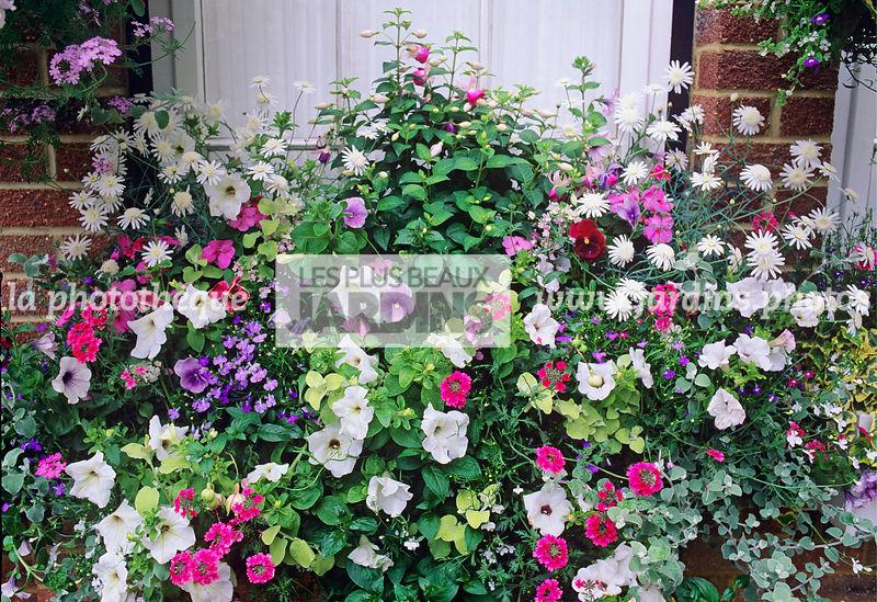 la phototh que les plus beaux jardins jardini re d 39 et fen tre fleurie fuchsia petunia. Black Bedroom Furniture Sets. Home Design Ideas