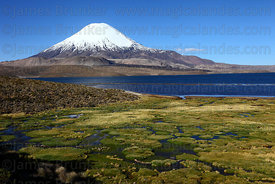 Parinacota volcano and bofedales on shore of Lake Chungará, Lauca National Park, Region XV, Chile