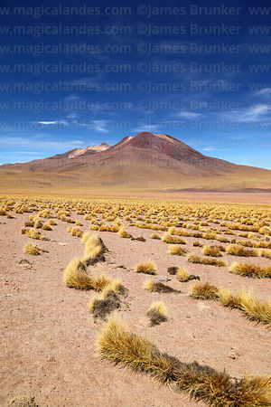 Tatio volcano and puna grassland, Region II, Chile