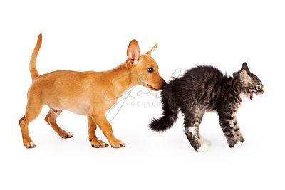 Puppy Sniffing Scared Kitten
