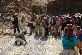 Men laying out the thin grass ropes prior to making the thicker ropes for rebuilding the bridge, Q'eswachaka , Canas province , Peru