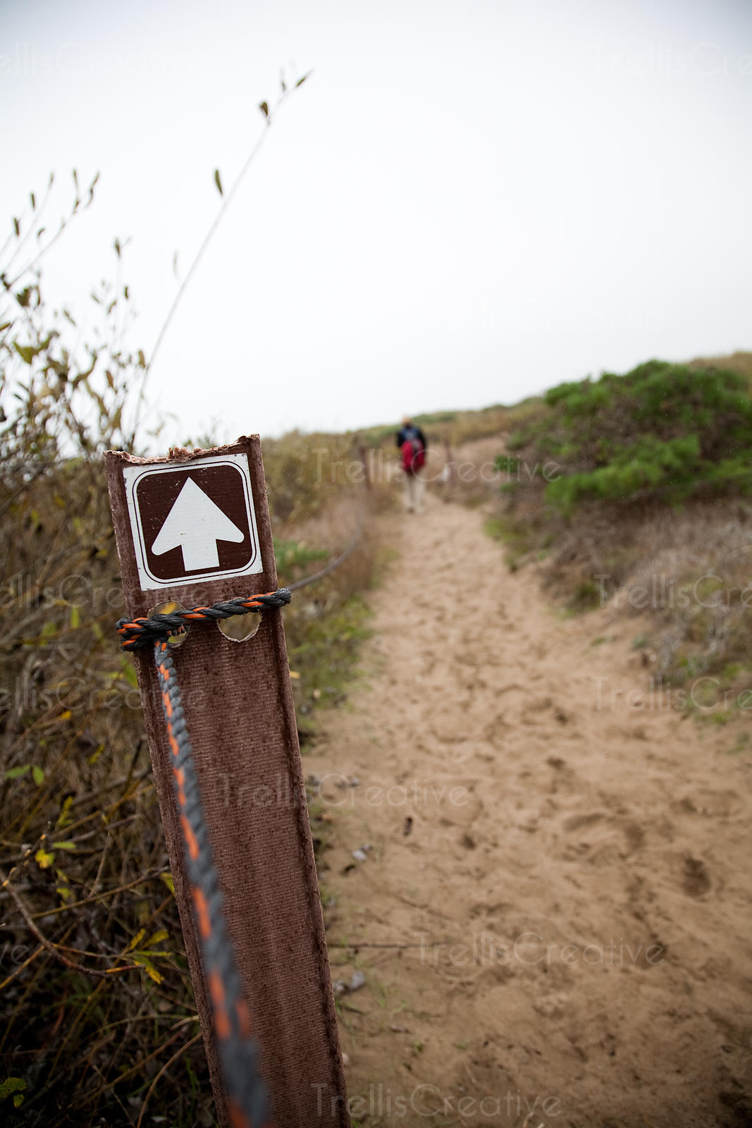 White arrow sign with a person at distant walking on the beach at Ano Nuevo State Reserve