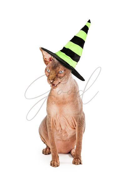 Scary Cat Wearing Witch Hat