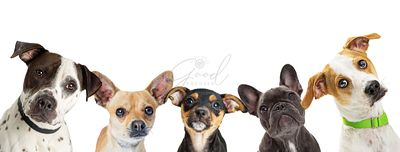 Multiple Dog Breeds in a Row Web Banner
