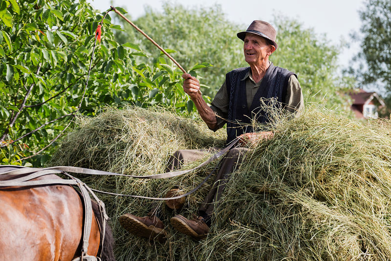 farmer Driving a Horse-drawn Wagon Loaded with Hay