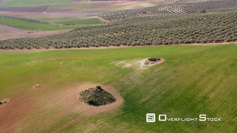 Aerial View of Olive Plantation First Half Showing Freshly Planted Young Trees, Second Half Mature Trees, Spain