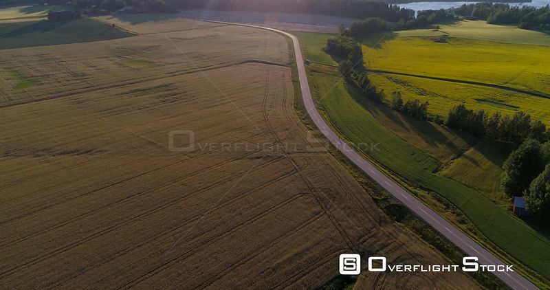 Man biking on the countryside, C4K aerial descending view towards a biker driving on a road, between wheat fields, on a sunny summer evening, in Uusimaa, Finland
