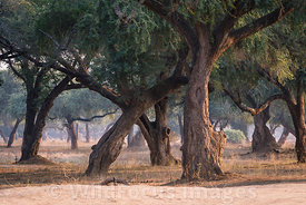 Mana Pools National Park, Zimbabwe; Landscape