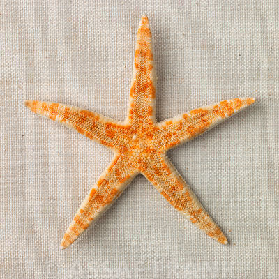 Star Fish photos