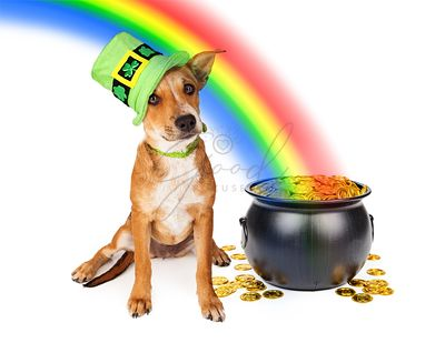 Dog With Pot of Gold and Rainbow