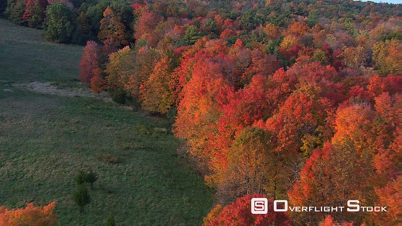 Low flight over woodland ablaze with fall colors