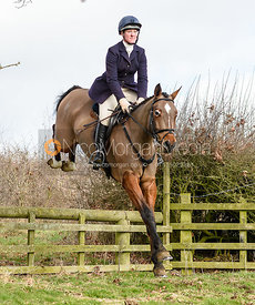 Nicola Wilson jumping a hunt jump at Jubilee Covert. The Cottesmore Hunt at Newbold Farm 16/2
