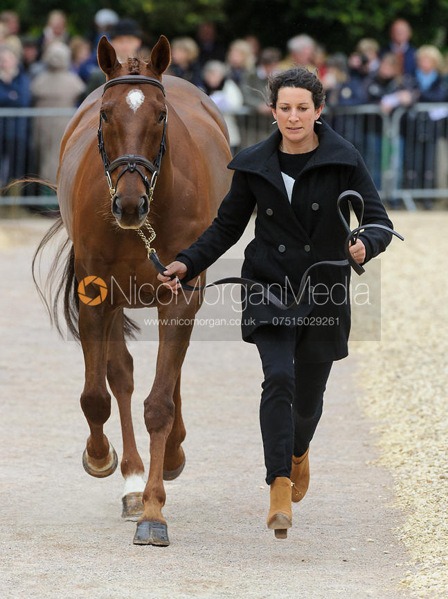 Annabel Wigley and FROG ROCK - First Horse Inspection, Mitsubishi Motors Badminton Horse Trials 2014