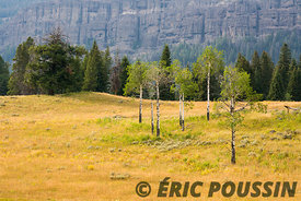 PHOTO_24_YELLOWSTONE_(37)