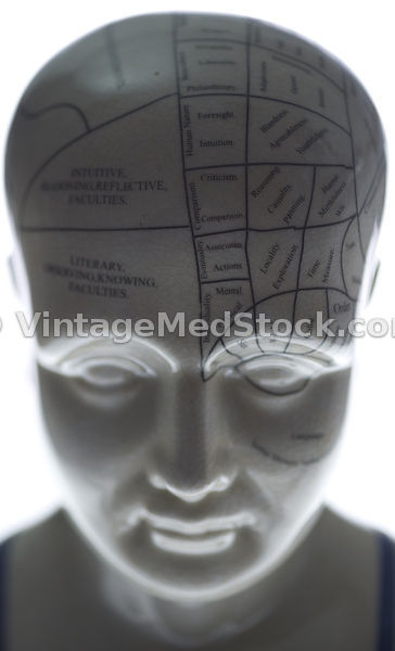 Phrenology Model Head