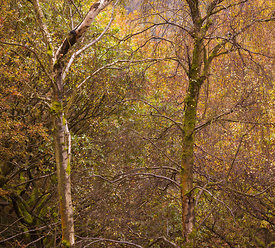 Bolehill Quarry  autumn trees