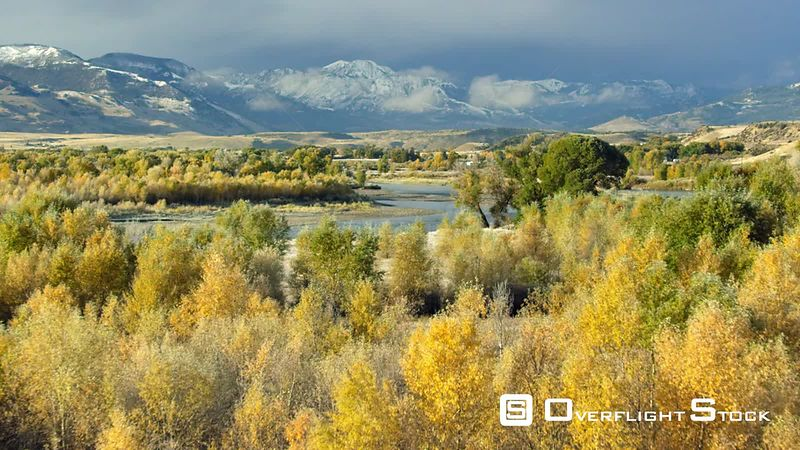 Dramatic golden Aspen and Cottonwood trees line the banks of the Yellowstone River in autumn, within the Paradise Valley, Montana