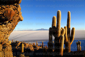 Giant Echinopsis atacamensis (pasacana subspecies) cacti and rock formations with conglomerate on Incahuasi Island, Tunupa volcano in distance, Salar de Uyuni, Bolivia