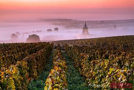 Sunrise on the vineyards, Ville Dommange, Champagne, France