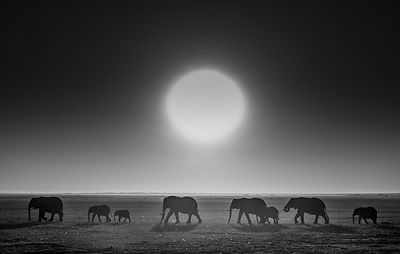9430-Elephants_against_the_sun_Kenya_2015_Laurent_Baheux