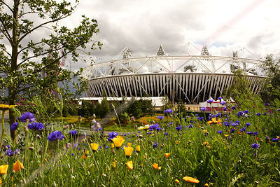 Meadow Flowers with the Olympic Stadium Behind