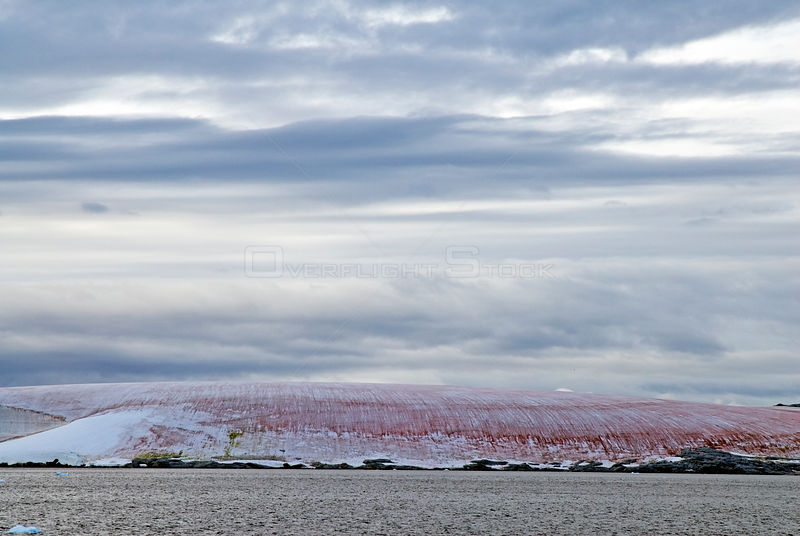 Red algae in ice on shore. Antarctic Peninsula. February 2008. Taken on location for BBC tv series 'Life'