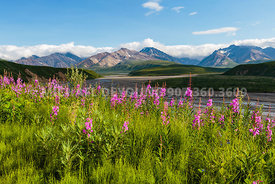 Alaska Landscapes Denali National Park