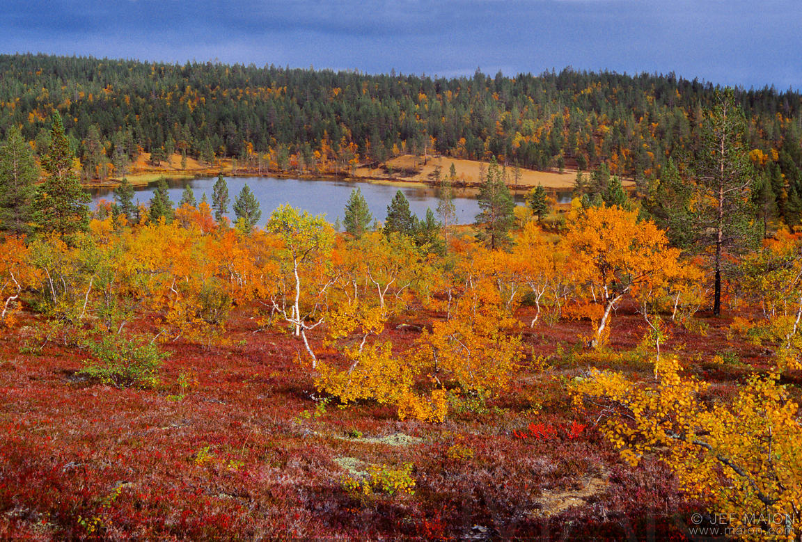 Pond and colorful autumn birch trees