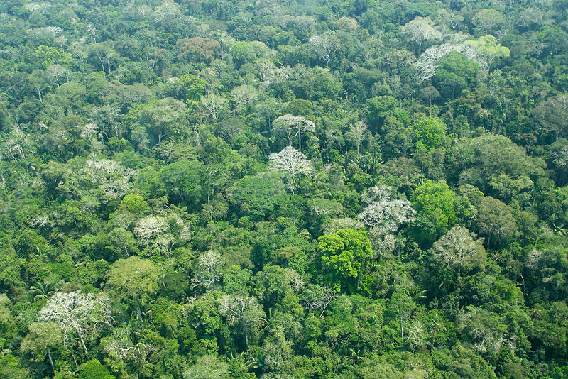 Aerial view of the Amazonian forest, Manu Wildlife Reserve, Peru
