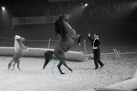 Zurich, Switzerland, 27.1.2018, Sport, Reitsport, Mercedes-Benz CSI Zurich - LGT Private Banking SHOW. Bild zeigt MAYCOL ERRANI of CIRCUS KNIE...27/01/18, Zurich, Switzerland, Sport, Equestrian sport Mercedes-Benz CSI Zurich - LGT Private Banking SHOW. Image shows MAYCOL ERRANI of CIRCUS KNIE.